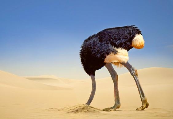 avestruz-e-a-crise